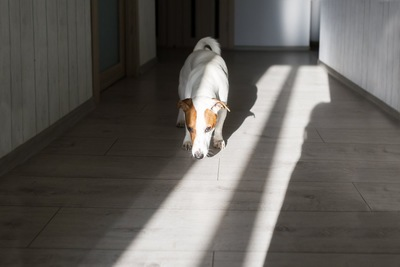 床を嗅ぐ犬