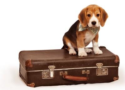 トランクと犬