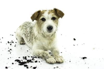泥まみれに汚れた犬