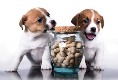 子犬とドッグフード