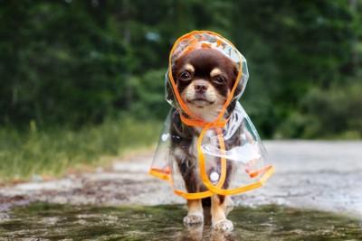 レインコートの犬