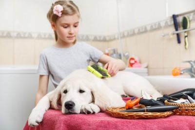 女の子にブラッシングされる犬