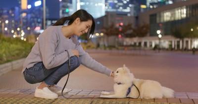 夜の散歩をする犬