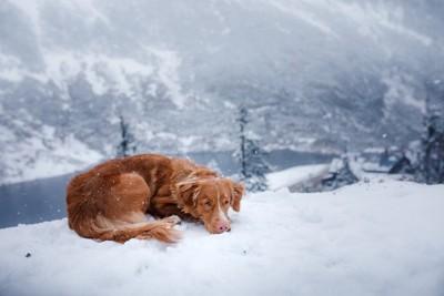 雪の上で寒そうに体を丸めている犬