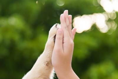 犬とタッチ