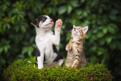 前足を上げる犬と猫