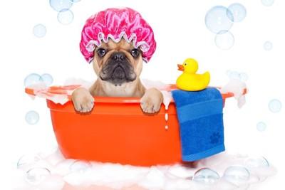 シャワーキャップをかぶって入浴中の犬