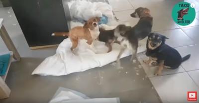 布団を引き裂いた犬