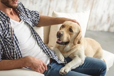 男性の膝の上に手をおく犬