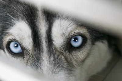 睨んでいる犬