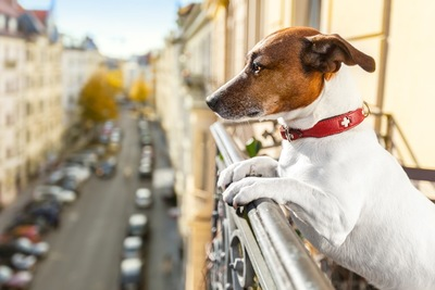 ベランダから外を見る犬