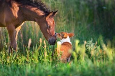 挨拶し合う馬と犬