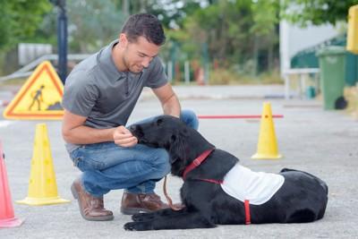 訓練中の犬とハンドラー