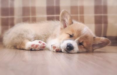 気持ちよさそうに眠る子犬