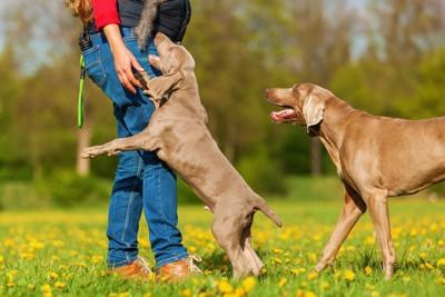 飼い主の足元に飛びつく犬と見守る犬