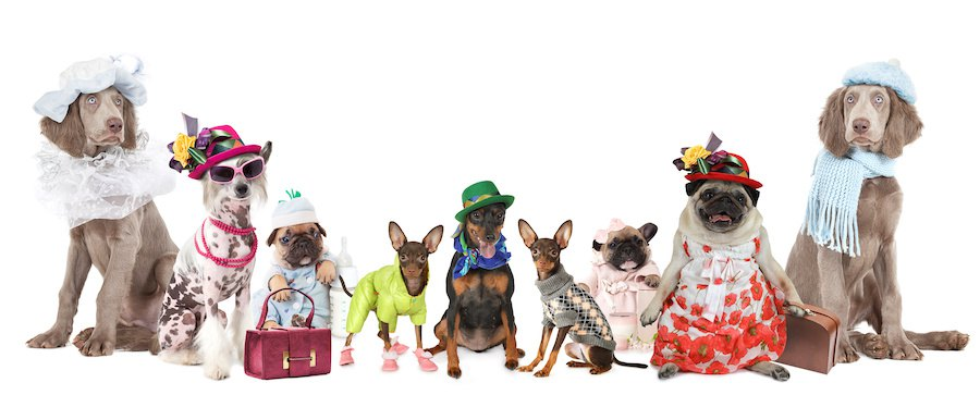 洋服を着る様々な犬たち