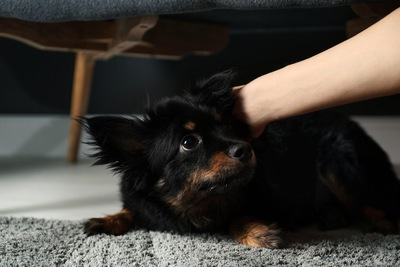 体を抑えられる犬