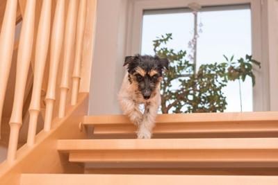 階段をおりる犬
