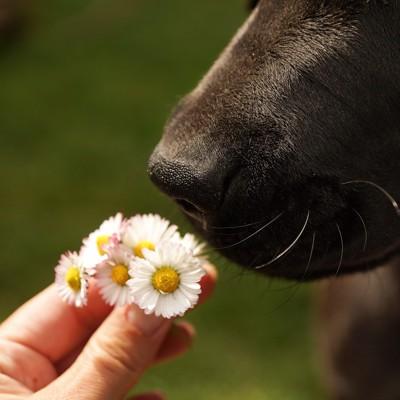 犬の鼻とお花