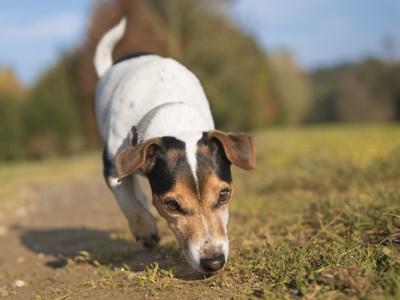 地面のにおいを嗅ぐ犬