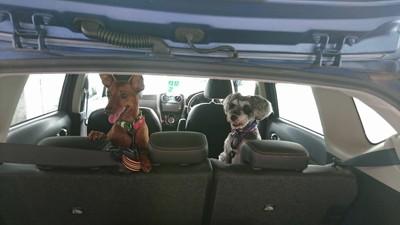 車中のシュナ