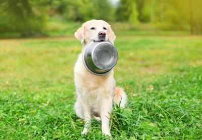 空の食器を咥えて食事を待つ犬