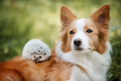 犬とハリネズミ