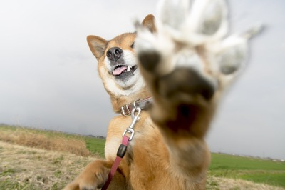 飛びかかってくる犬