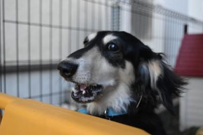ケージの中で吠える犬