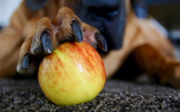 70754786 リンゴを手で押さえる