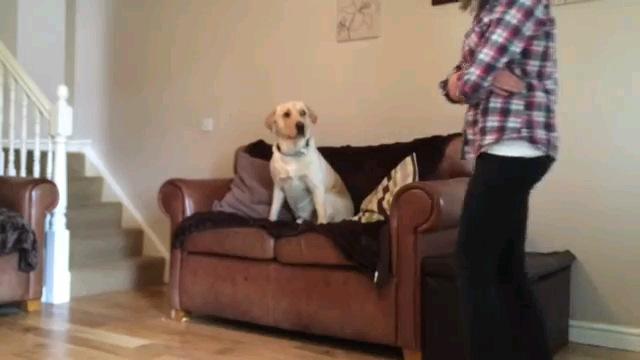 飼い主さん見る犬