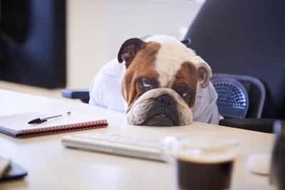 怠そうにデスクに座っている犬