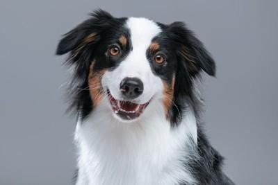 笑顔で吠えそうな犬