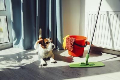 掃除道具のそばに伏せる犬