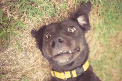 目を見開く犬
