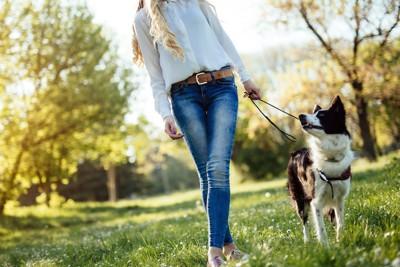 自然の中を散歩をする犬と女性