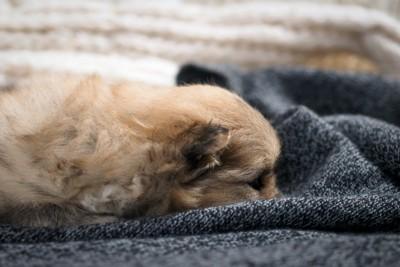 布の中に顔を埋めている犬