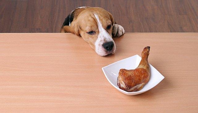 テーブルの上の肉の匂いを嗅ぐ犬