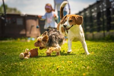 一緒に遊ぶ2匹の犬