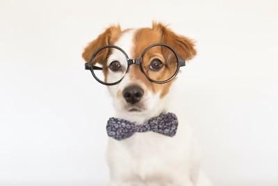 蝶ネクタイとメガネをつけた犬
