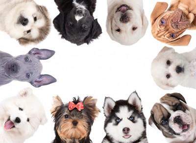 いろいろな犬種の子犬たち