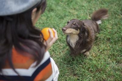 芝生で女性とボールで遊ぶ犬