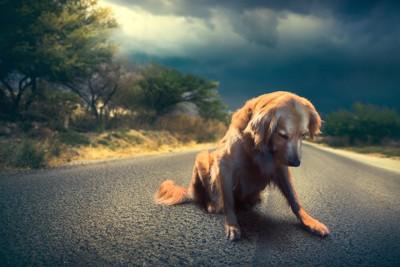 道路で俯いて悲しげな犬