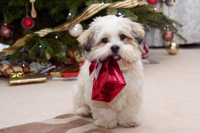 赤い袋をくわえた犬