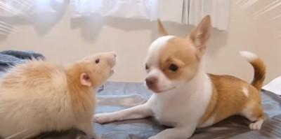 ネズミと見つめ合う犬