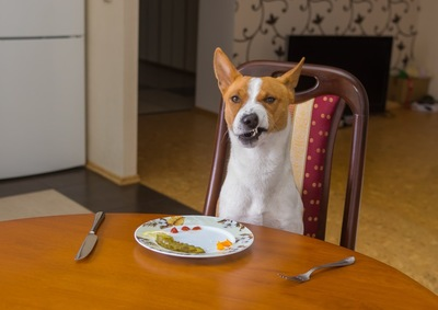 食事に文句を言う犬