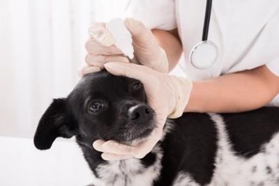 目薬をさされる犬