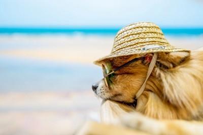 犬にサングラスと帽子、背景の海