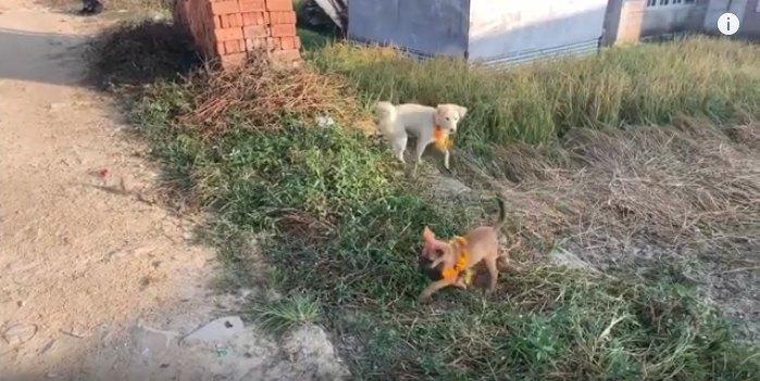 走り回る犬達
