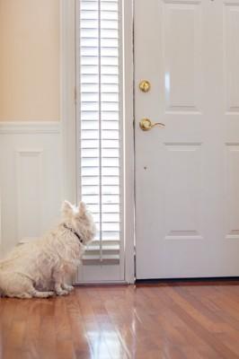 ドアを見つめる犬